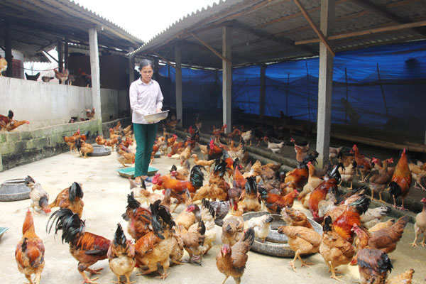 Tìm hiểu về gói vay chăn nuôi ngân hàng AgriBank