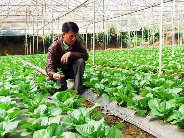 Ngân hàng nào hỗ trợ cho vay thế chấp đất nông nghiệp?