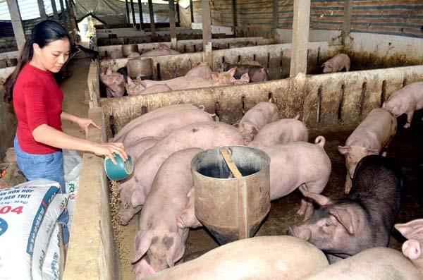 Hạn mức và thời gian vay vốn chăn nuôi Agribank